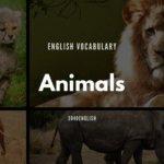 動物の英語・英単語一覧74種類【音声・例文あり】