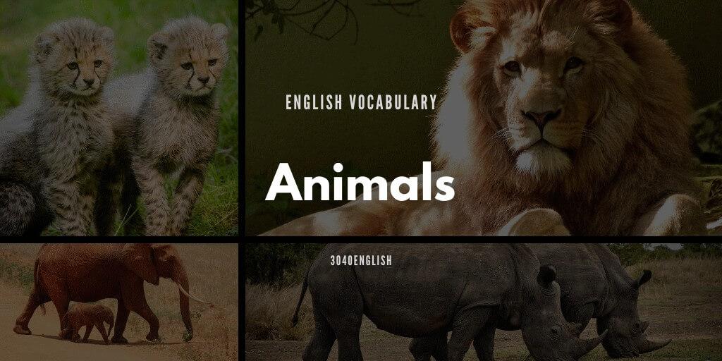 リス・キリンなど動物の英語一覧80種類【音声・英単語・例文あり】