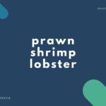 【エビ】prawn・shrimp・lobster の違いとは?【音読用例文あり】