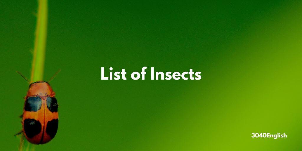 「昆虫」の英語一覧【音声・英単語・英会話用例文あり】